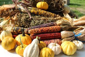 Pumpkins, Indian Corn and Gourds